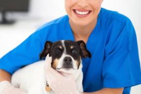 auxiliar-veterinario
